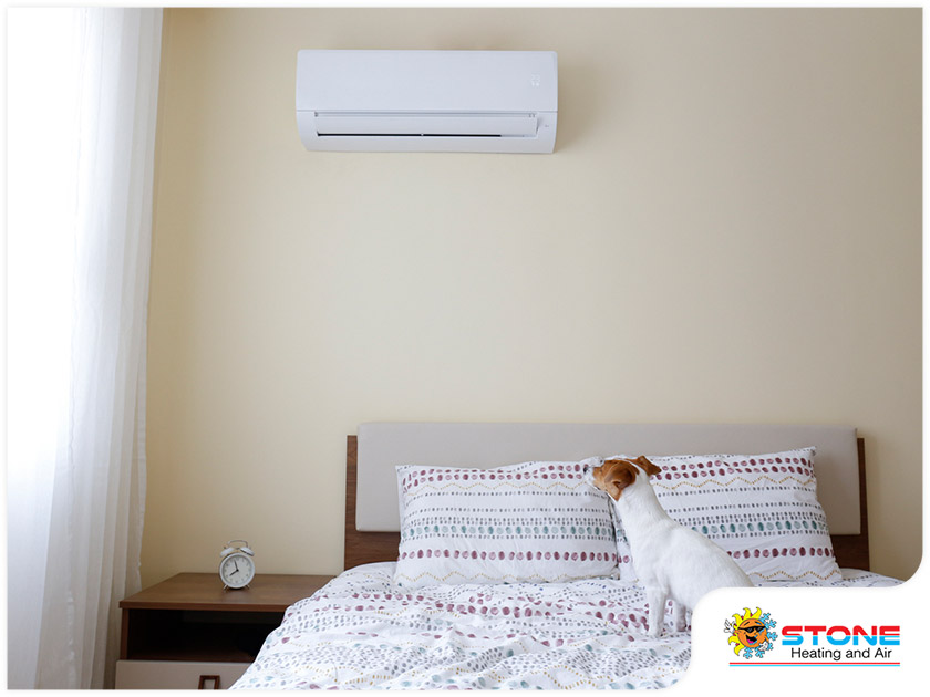 dog in an air conditioned room