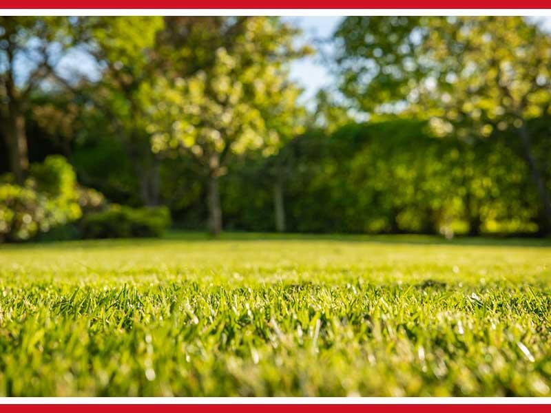 Minimize Soil Erosion