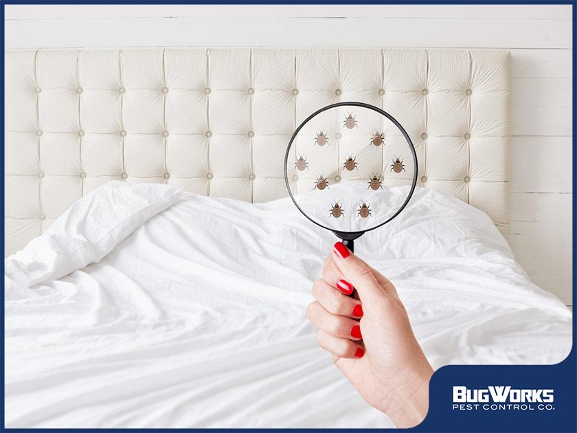 bed bugs illustration double bed pest infestation