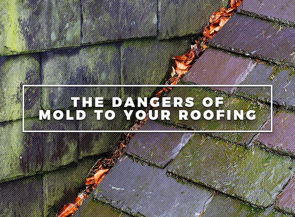 Dangers Of Mold To Your Roofing