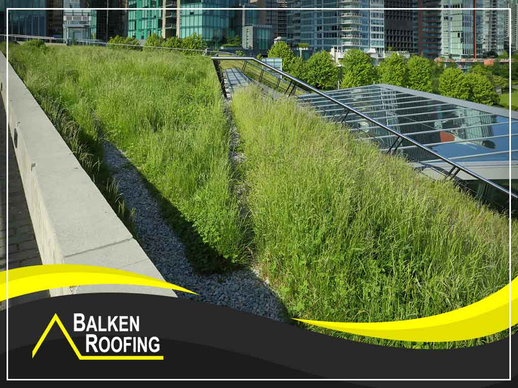 Debunking Myths About Living Roofs