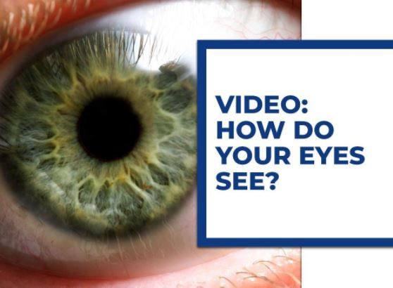 Video: How Do Your Eyes See?